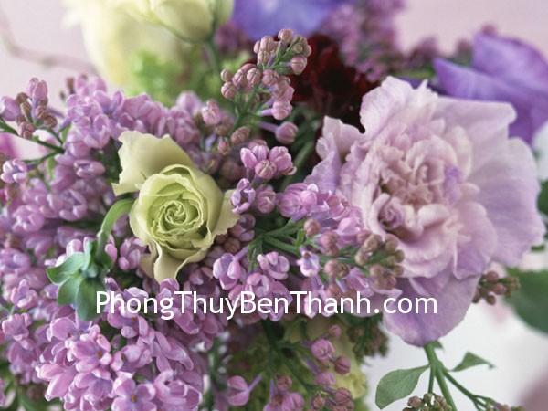 hoa mau don Giải pháp cho đàn ông độc thân