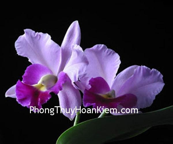 hoalan 15 Tranh hoa lan